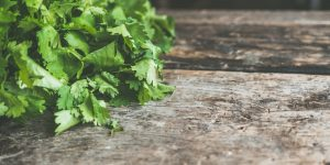 Revealing The Top Benefits Of Herb Gardening