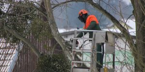 Employing The Professional Services Of Tree Experts – Why You Should Seriously Consider It