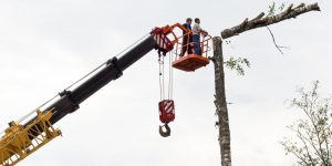 Choosing Which Chainsaw to Get – Guidelines to Apply When Buying