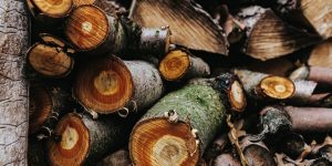 Why You Should Employ a Professional Arborist – Beyond Tree Removal